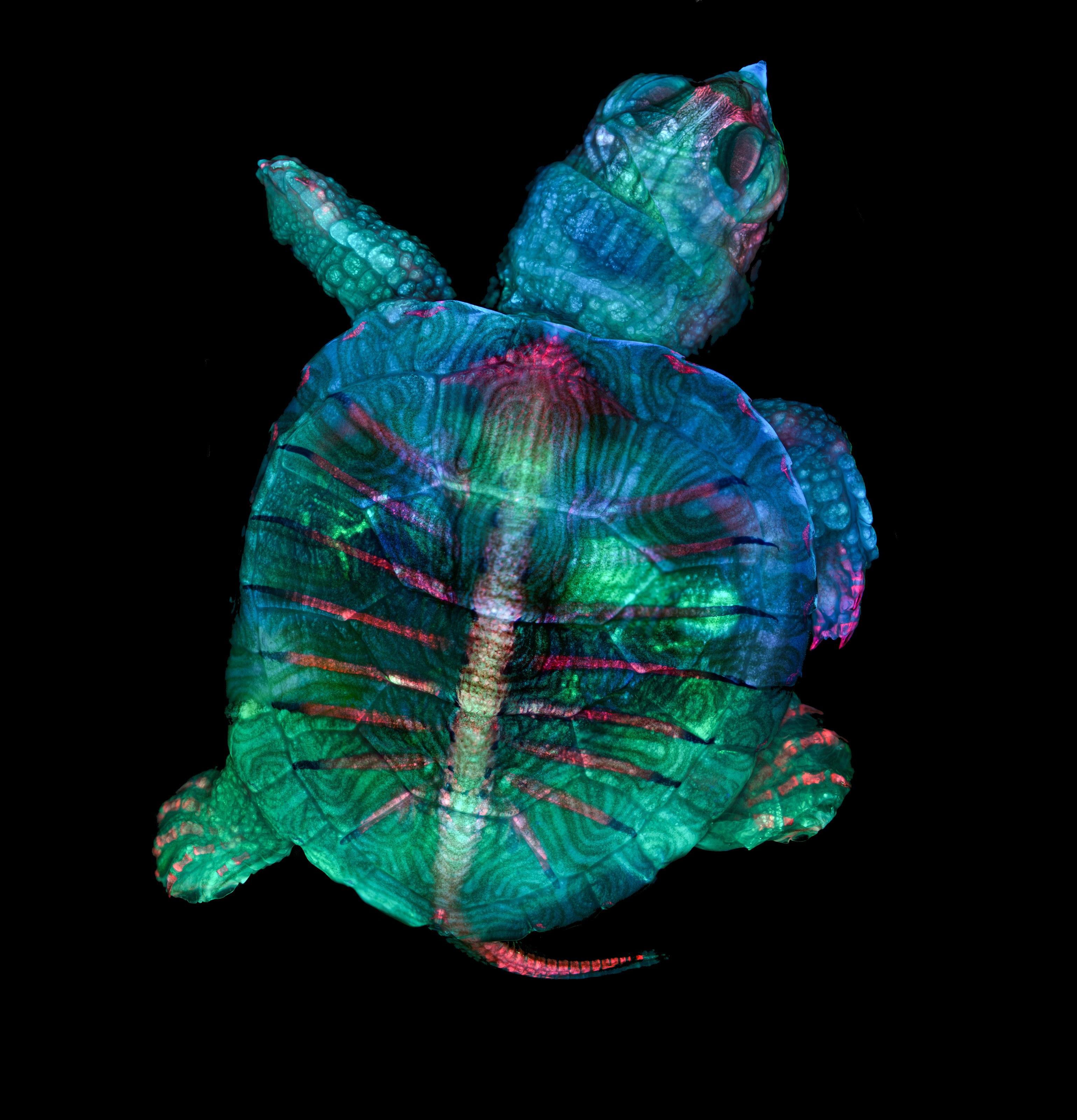 turtle under microscope