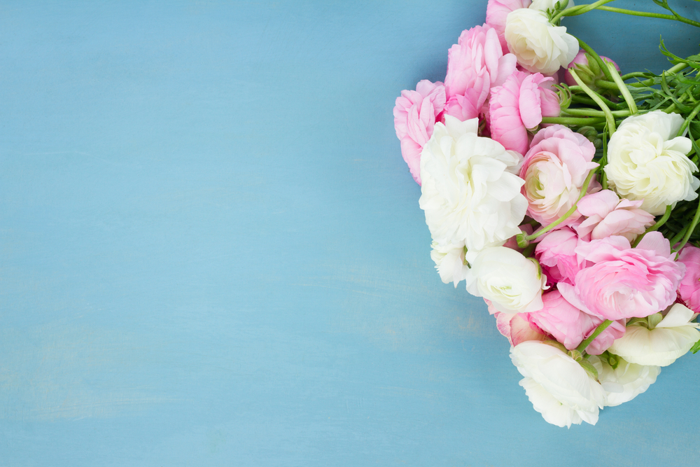 blooming flowers on blue wooden background