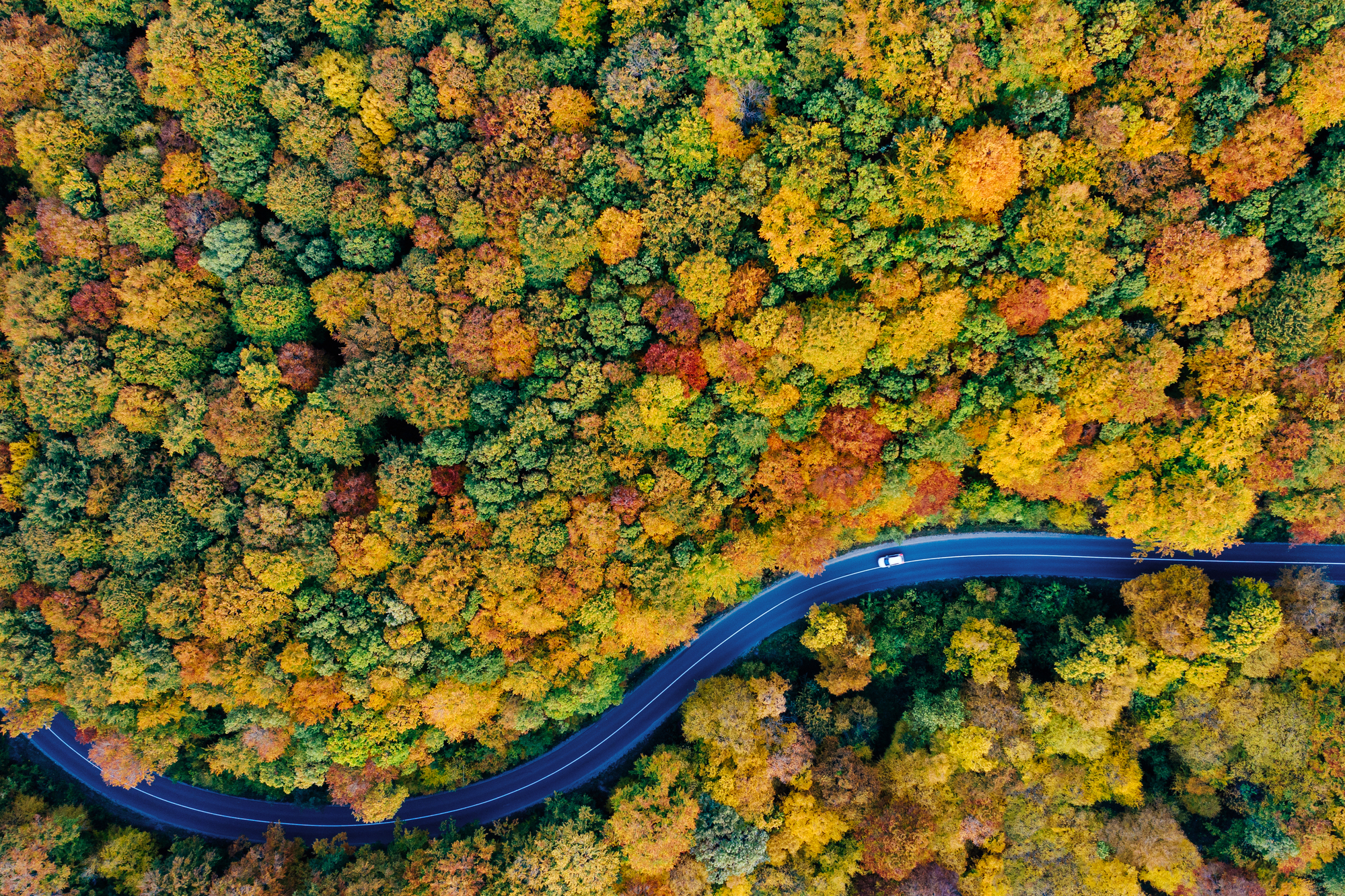 Drone view of a forest and a serpentine road autumn
