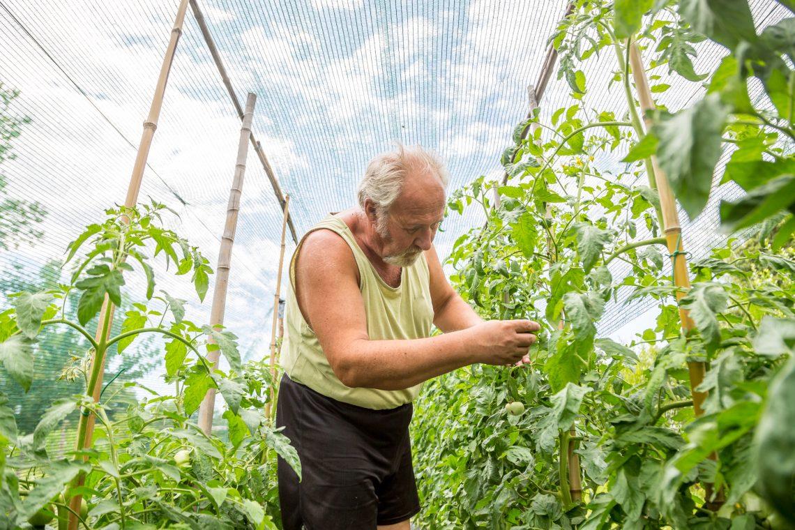Real farmer in his own home garden stock photo
