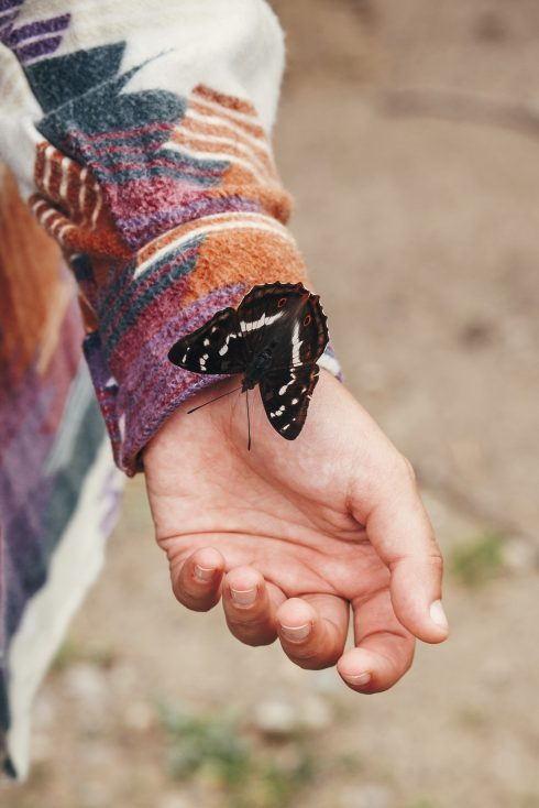 stock photo of beautiful butterfly on girl hand