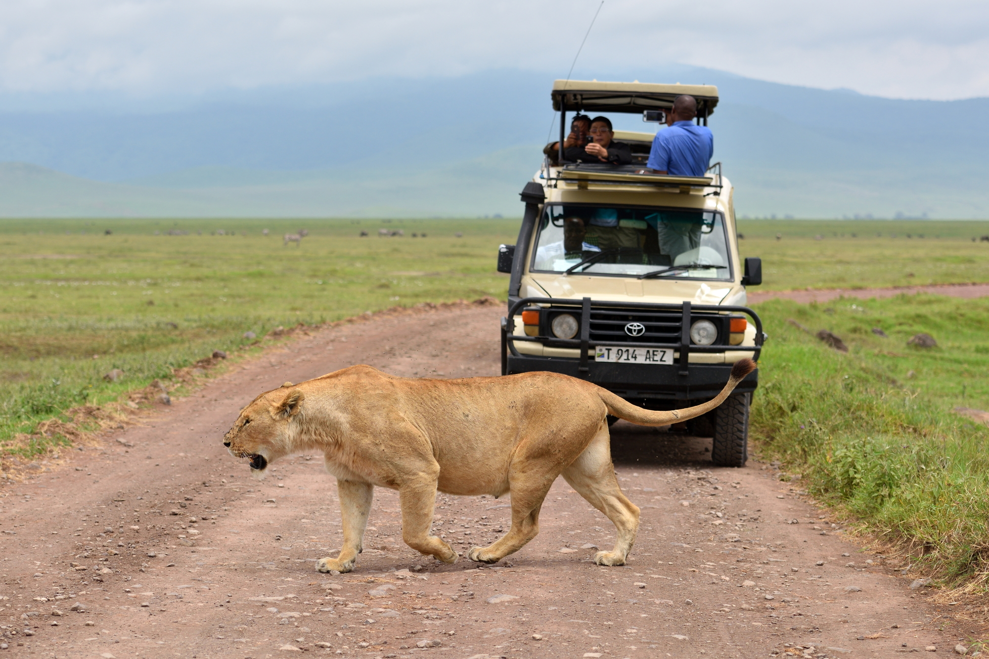 stock photo lion in african natural park