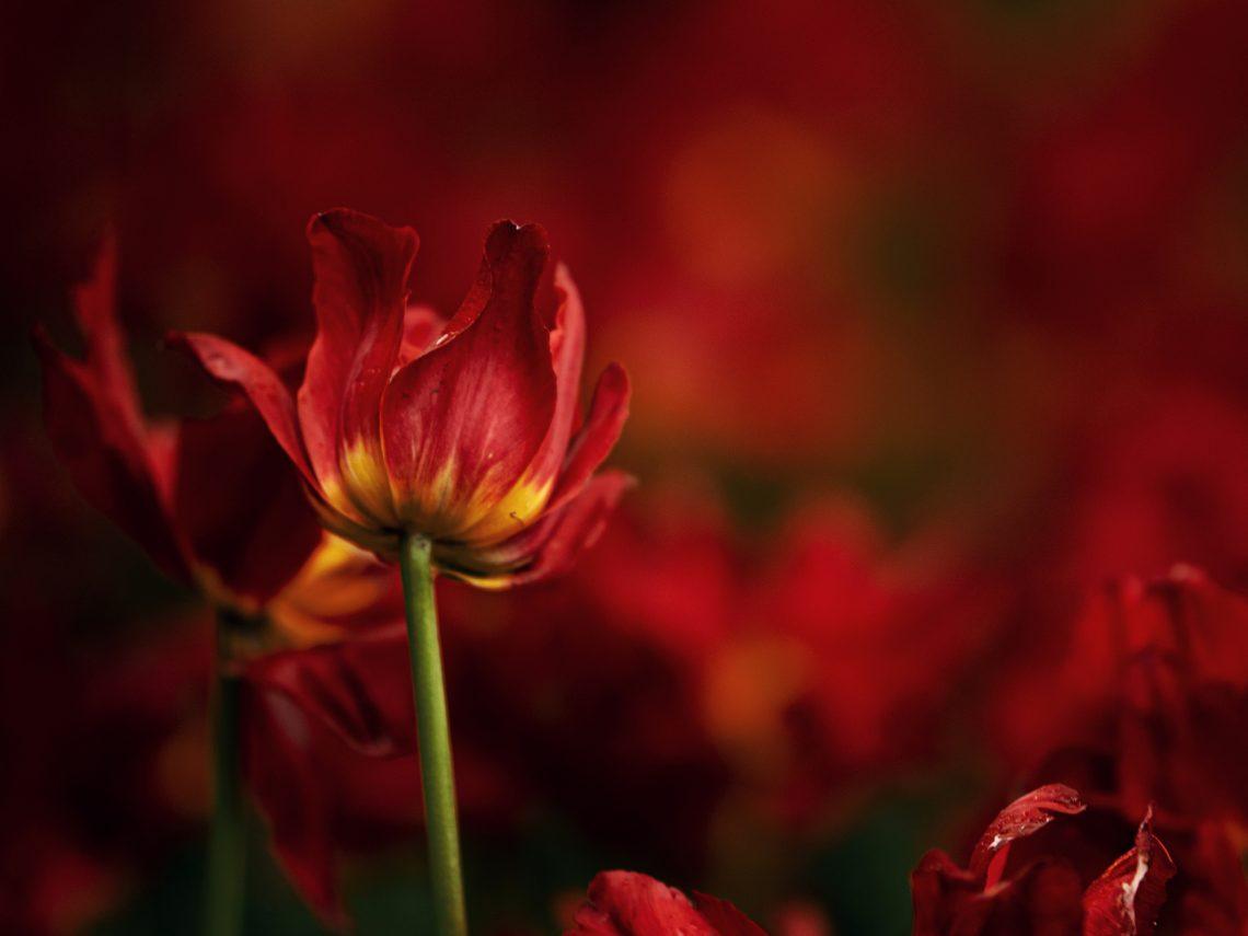 stock image background flowers