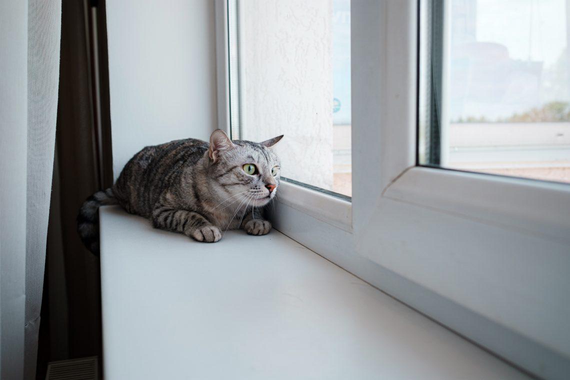 Beautiful gray cat sits on a windowsill stock photo