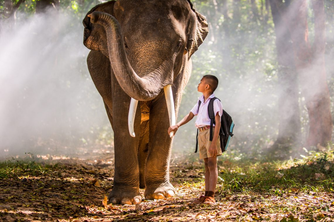 Elephant and school kid in asian jungle stock photo