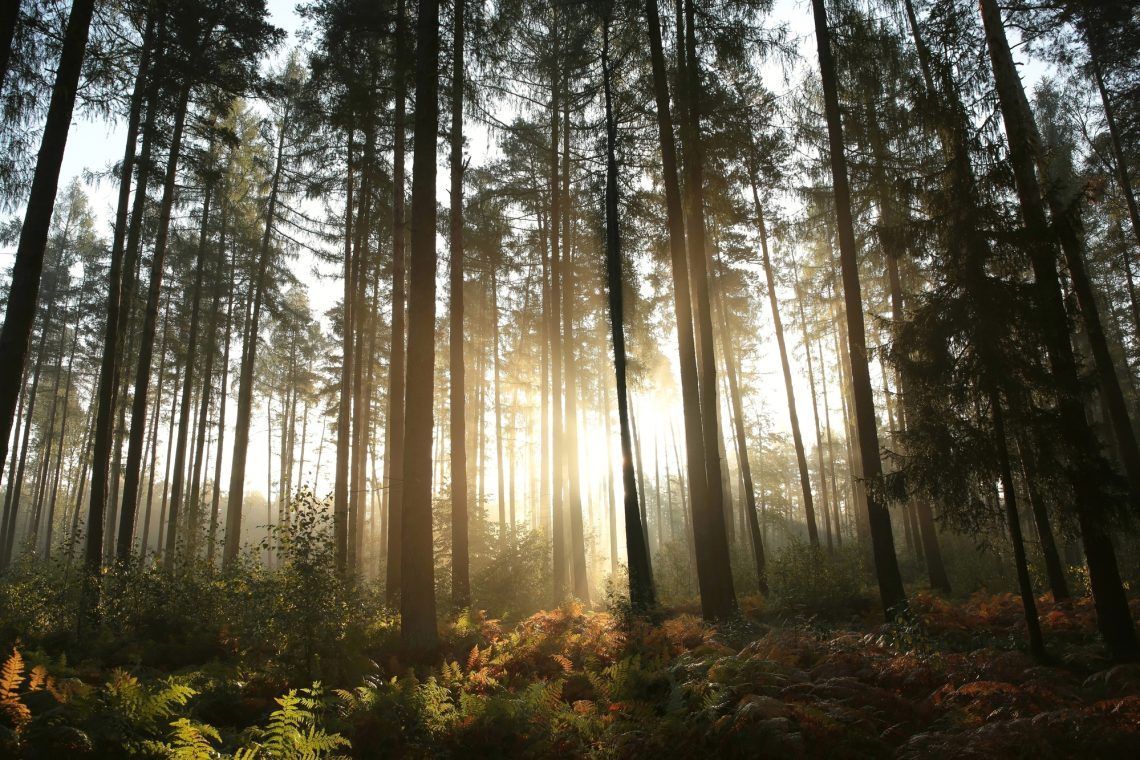 stock photo foggy forest
