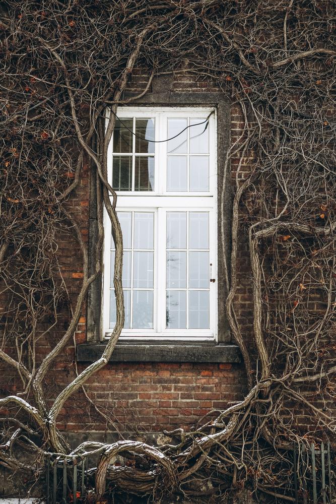 stock photo window plant