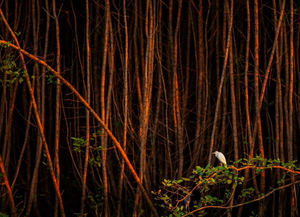 abstract stock photo trees