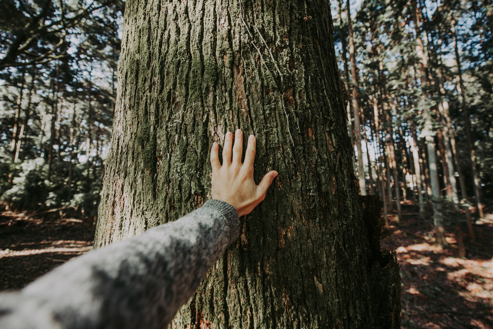 stock photo hand tree