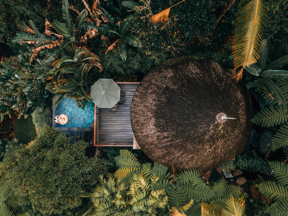 stock photo green forest house jungles