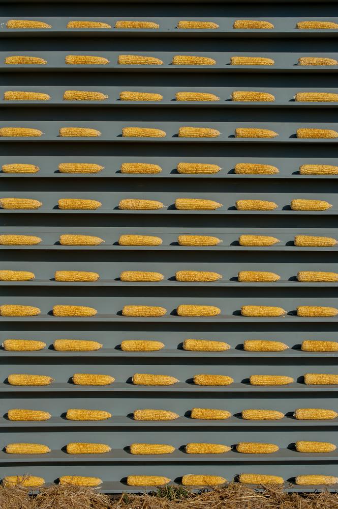 stock photo corn factory