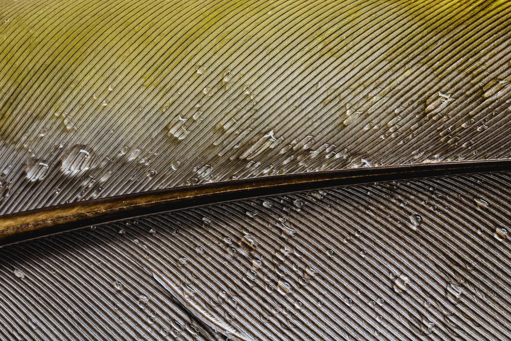 stock photo feather yellow