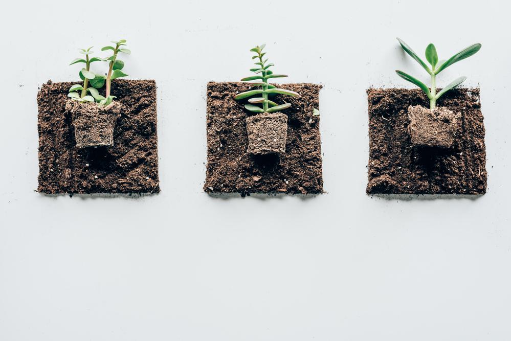 stock photo gardening plant soil
