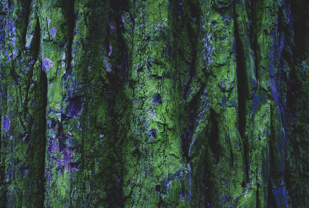 stock photo tree moss